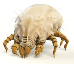 How to keep dust mites out of your house
